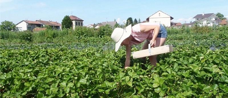 Les Jardins de Banset