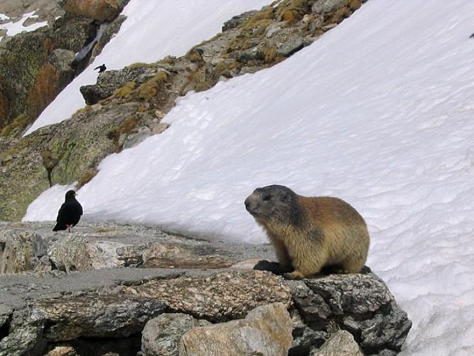 Grande traversée des Alpes, du Léman au Mont Blanc
