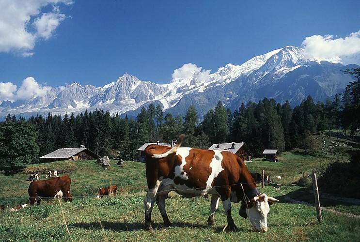 Charousse pasture