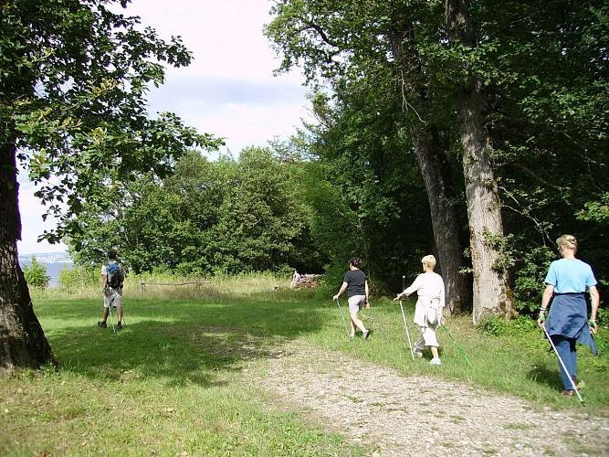 Forêt de Ripaille