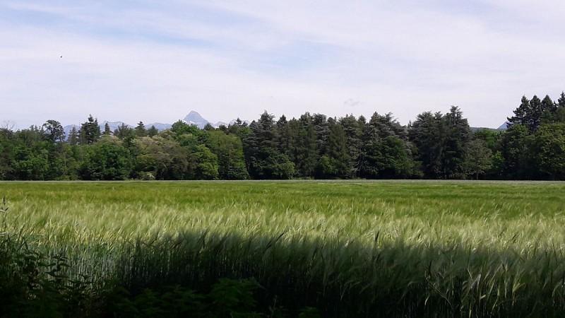 Arboretum of Ripaille