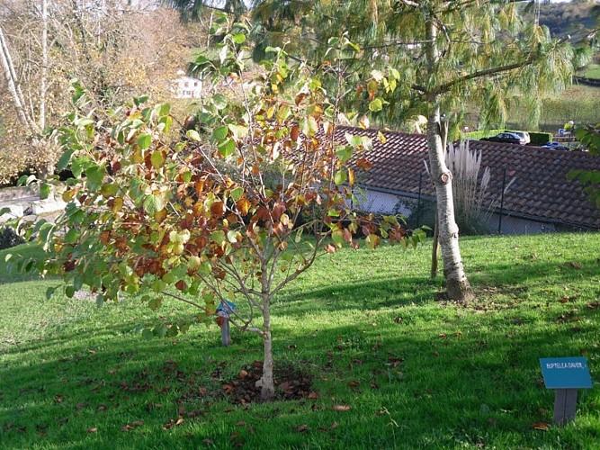 L'Arboretum du Père Armand David