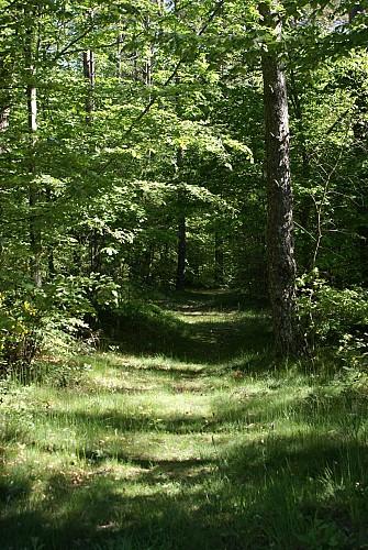 Tourbière des Vergnes des Mazes - Sentier de découverte