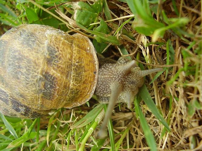 La ferme aux escargots