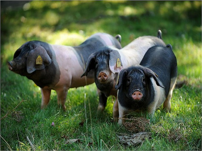 Belaun - Magasin de producteurs fermiers