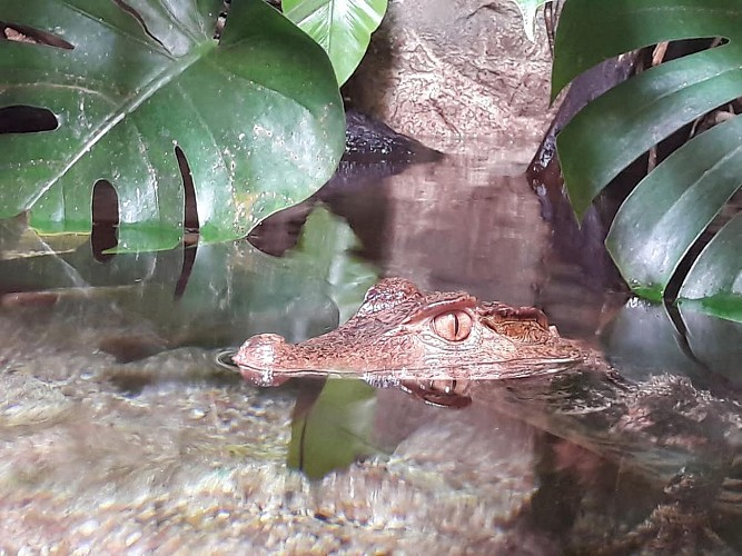 Limousin's Aquarium