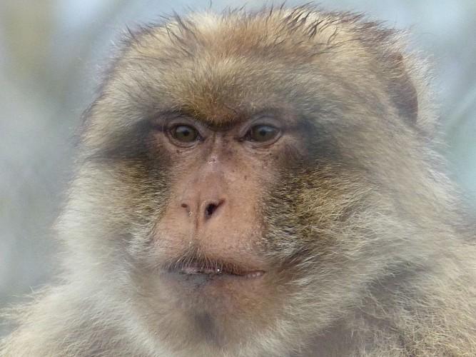 Parc animalier du Ségala