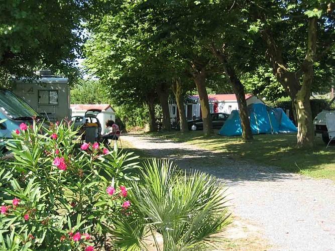 Arena Camping