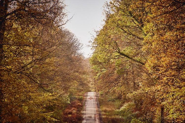 Randonnée en forêt de Saint-Gobain