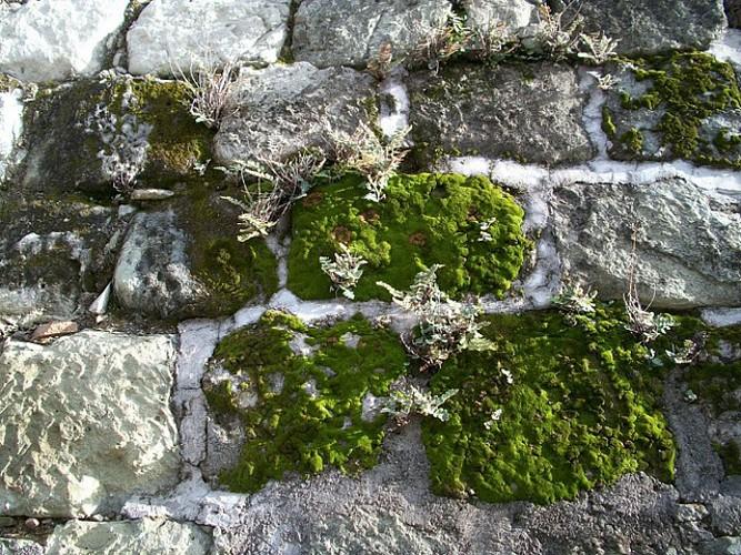 Exposition - Minéraux et lichens endémiques