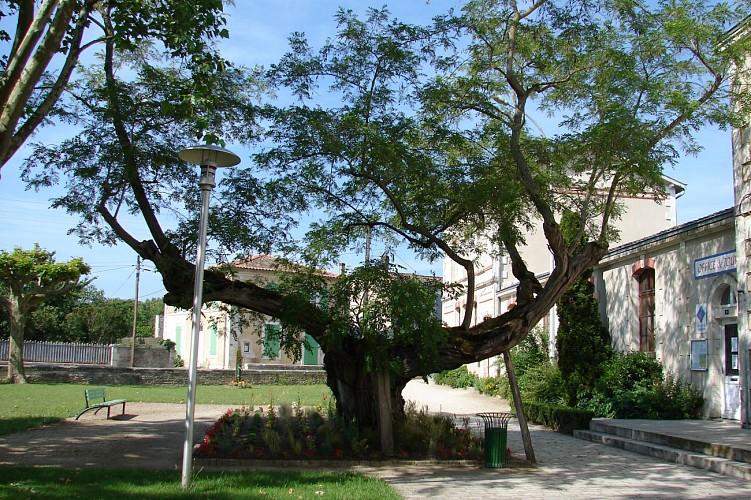 Saint-Hilaire-la-Palud, capitale du Marais sauvage