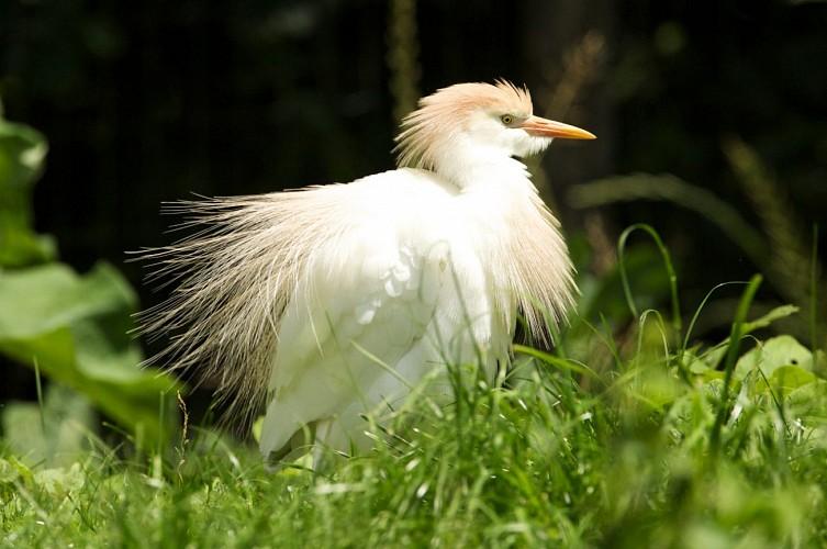 """Parc ornithologique """"Les oiseaux du Marais poitevin"""""""