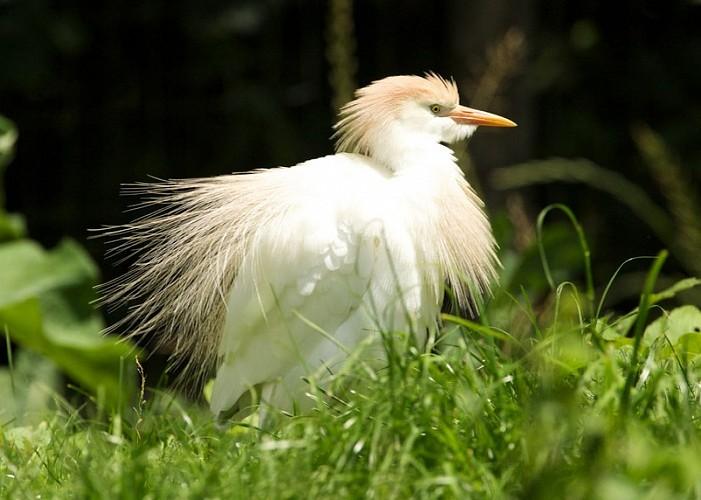 """Le Parc Ornithologique """"Les Oiseaux du Marais Poitevin"""""""