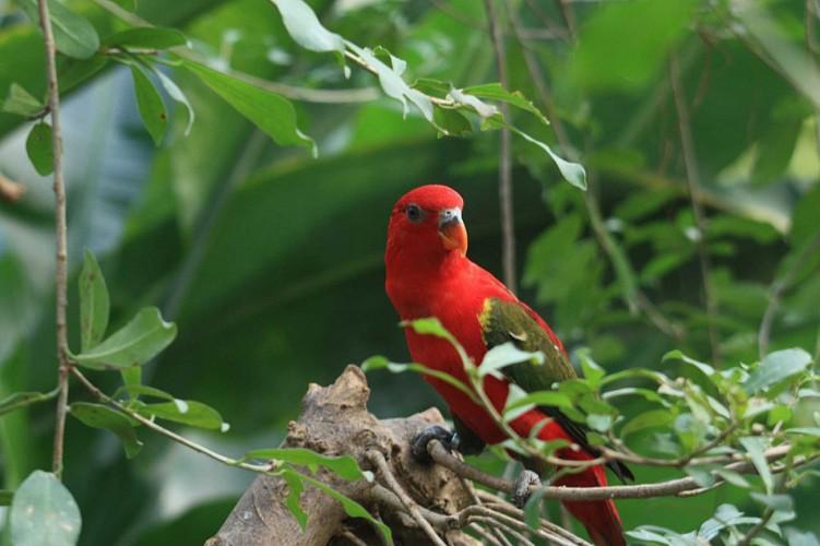 Le Naturospace - oiseaux et papillons tropicaux en liberté