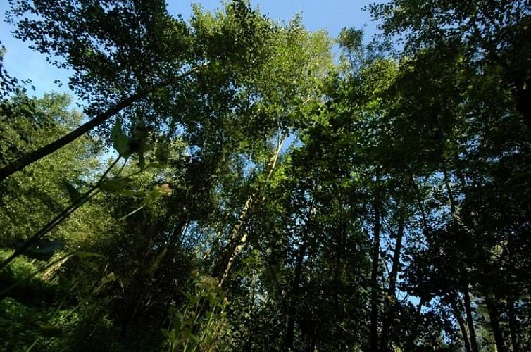 Bois Chenu de Proville