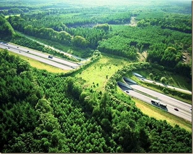 Le Pont à gibier dans le bois de Grünhaut