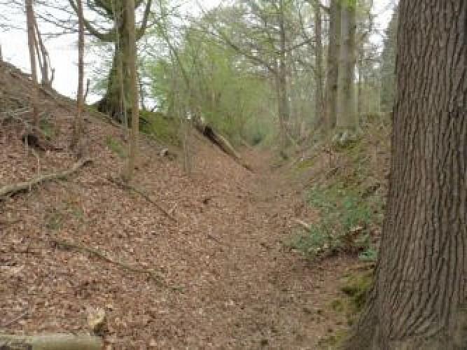 Chemin cavalier au bois de Grünhaut
