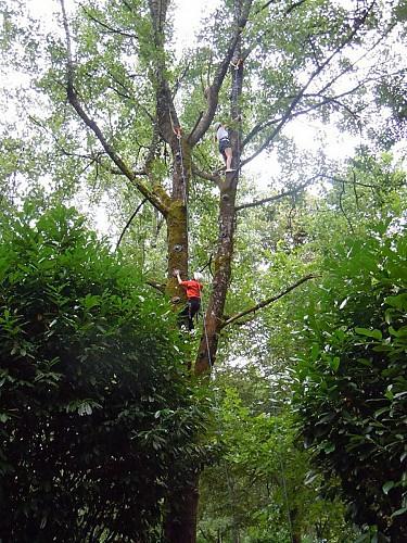 Escalad'arbres Pays d'Argentat