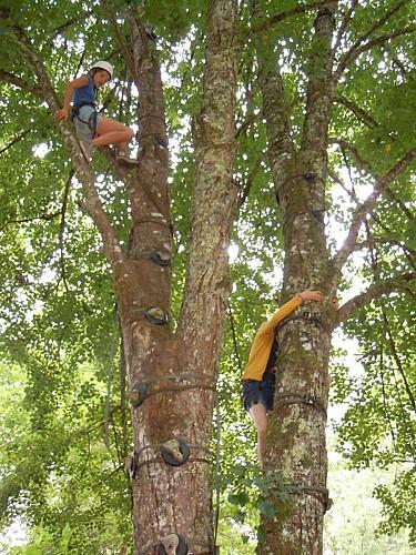 Escalad'arbres Argentat