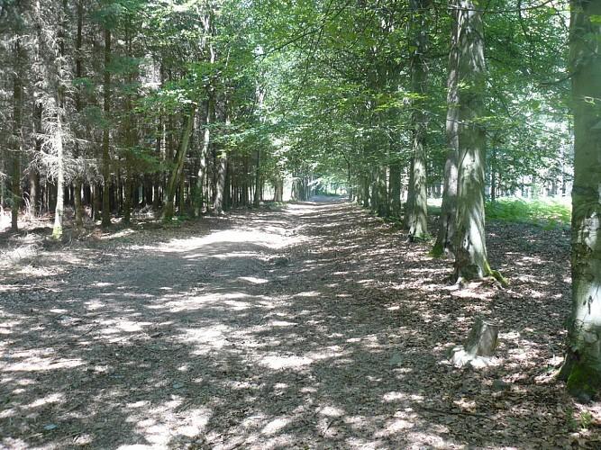 les Bois de Goronne à Farnières