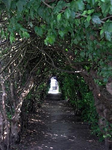 Laubengänge aus Korneliuskirschbäumen