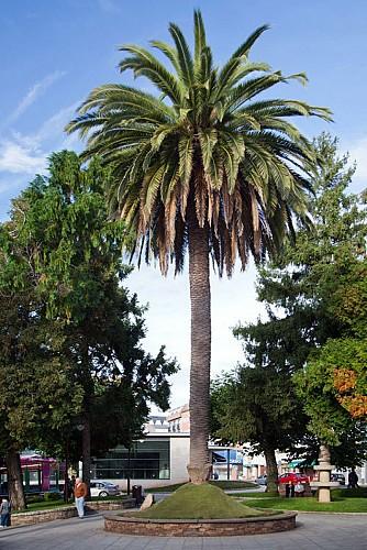 La plaza del Ayuntamiento: Lugar para el encuentro