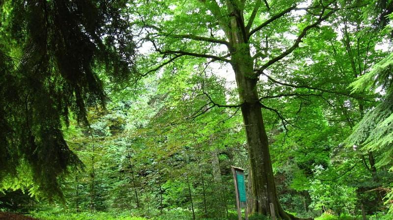 Arboretum du Fourneau Saint-Michel