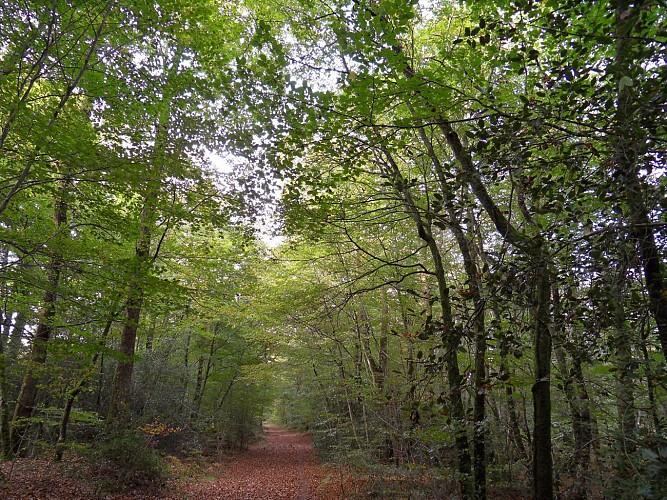Forêt domaniale de Lanvaux