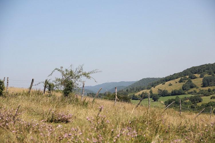 Limite Ain - Jura sur le plateau d'Arnans