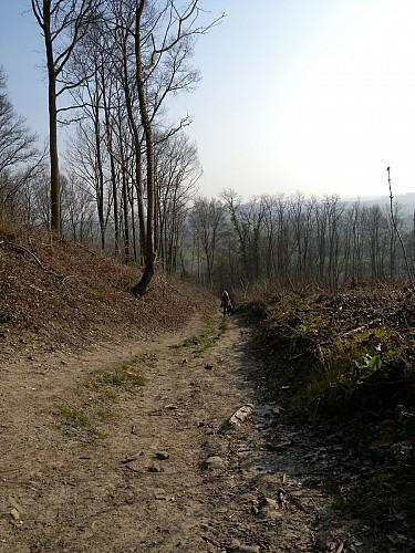 Mont-Panisel