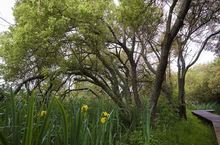 Marais du Quellen, Trébeurden
