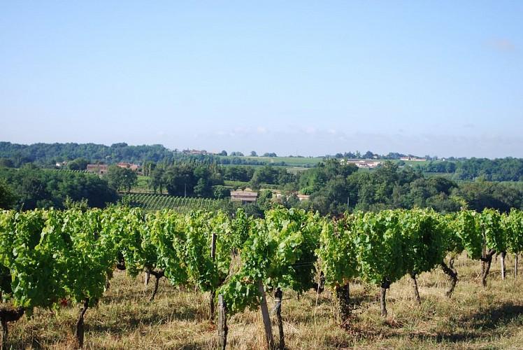 Le vignoble et l'estuaire