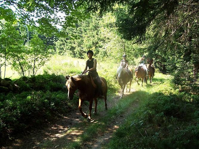 Promenade / Randonnée à cheval dans les Vosges (Le Tholy, Gerardmer)