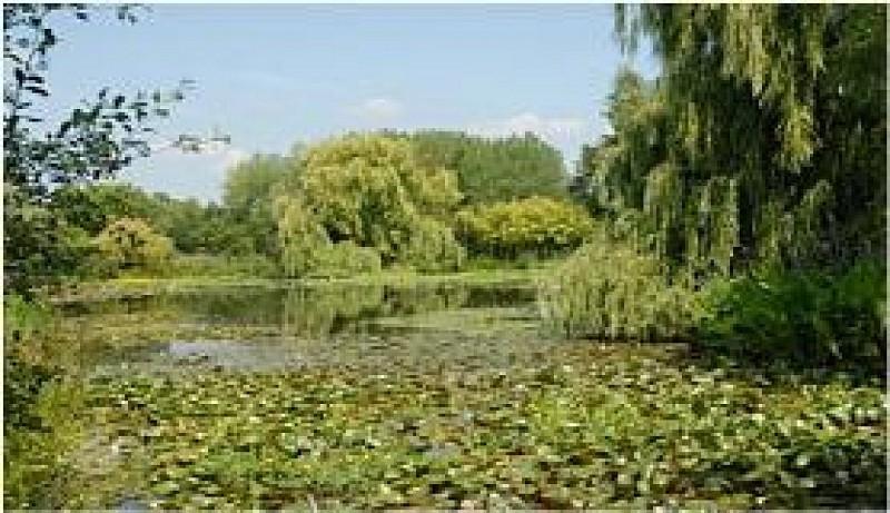 Point d 39 int r t les jardins aquatiques de saint didier - Les jardins aquatiques saint didier sur chalaronne ...