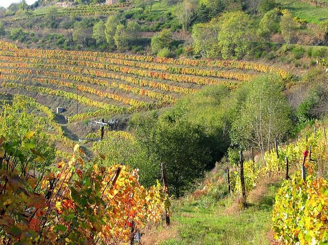 Le Fel, un village, un vignoble