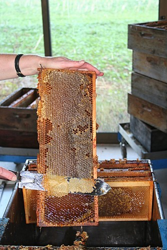 Musee_apiculture_02