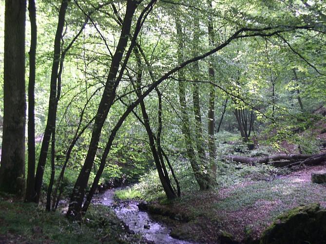 Le bois des Rocs