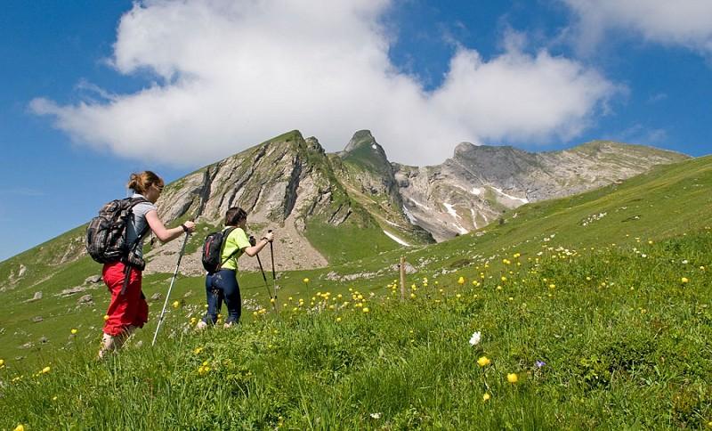 Aup Alpine Pasture