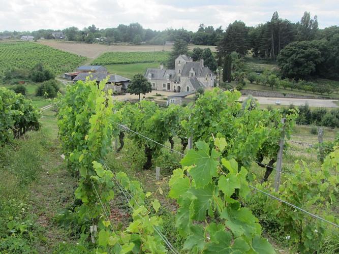 Sentier d'interprétation du vignoble « Vignoble et patrimoine »
