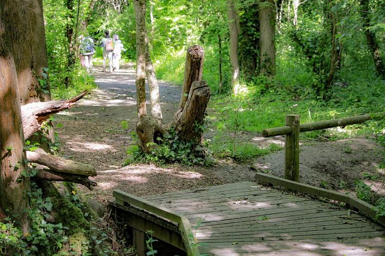 Caprice Wood