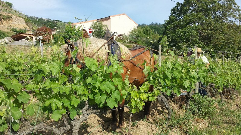 Winery Guy Farge