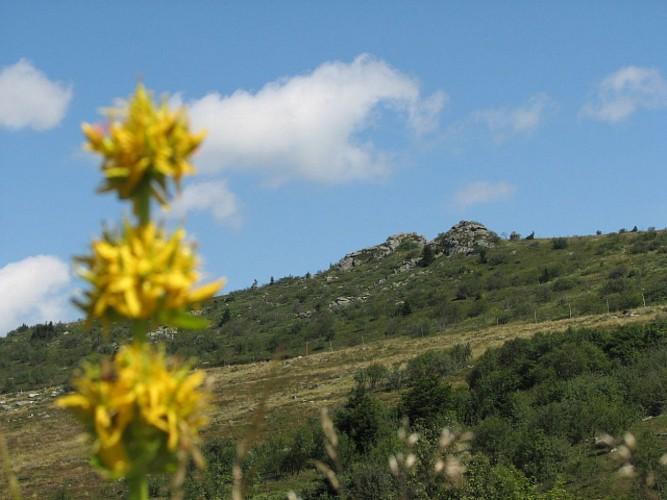 Vallée du Fossat