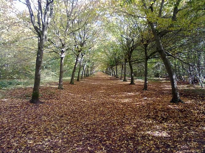 La forêt de Chantilly