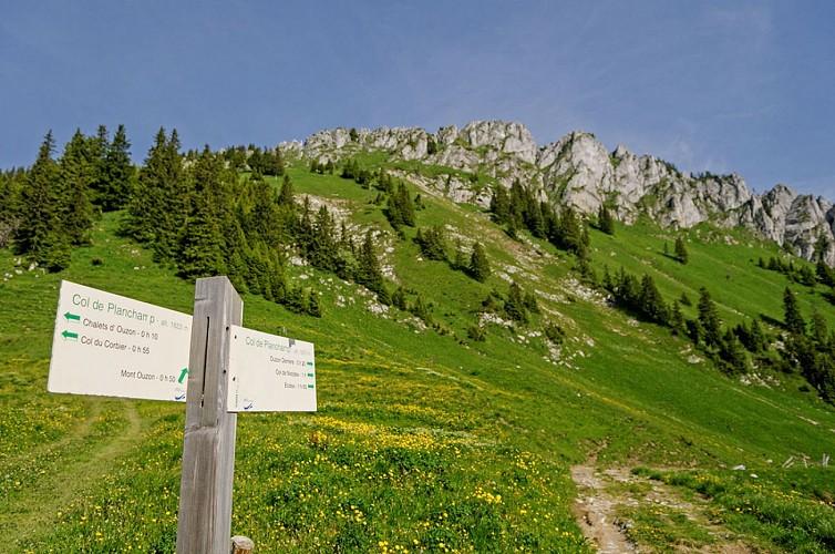 Ouzon Alpine Pasture
