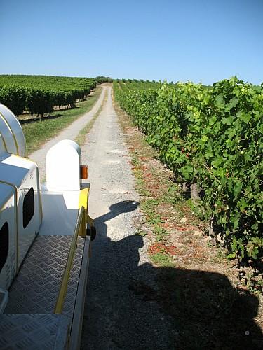 Autres petit train touristique des vignes chalonnes sur loire - Office de tourisme maine et loire ...