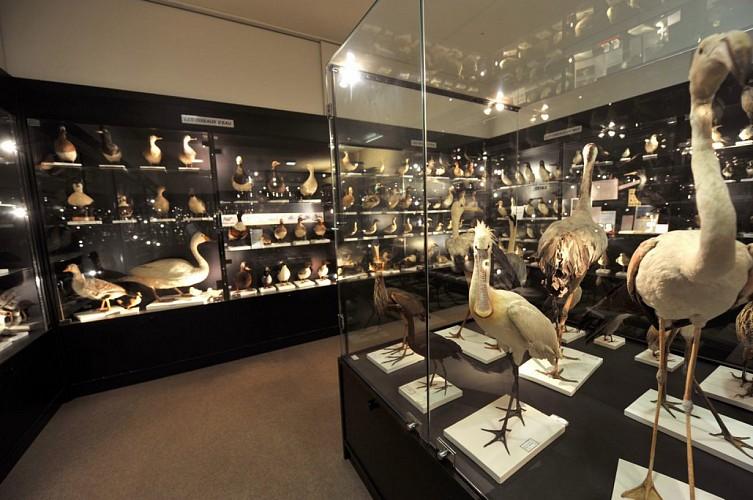 MUSÉE ORNITHOLOGIQUE CHARLES PAYRAUDEAU