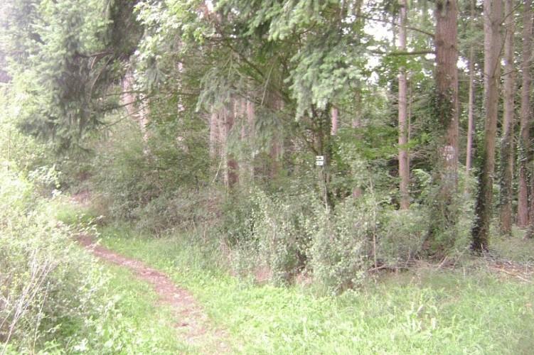 Descendez le sentier qui longe le bois par la gauche