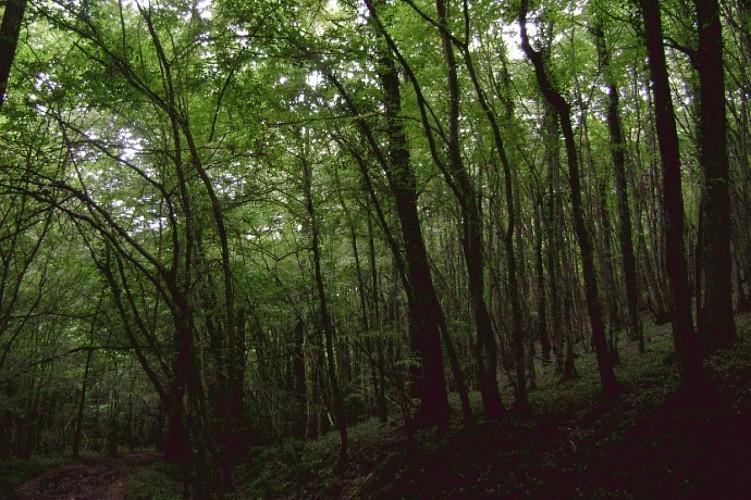 Entrez dans le bois