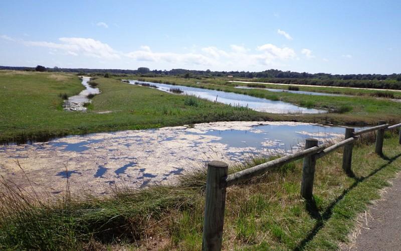 Marais des Loirs
