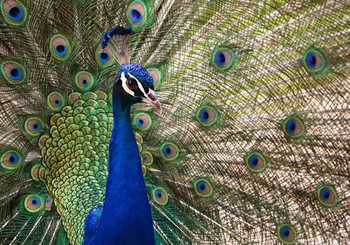 Barcelona Zoo Visit